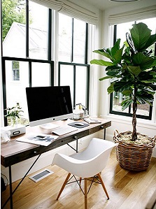 add-green-plants-for-productivity