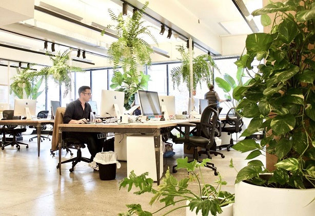 green-office-for-productivity